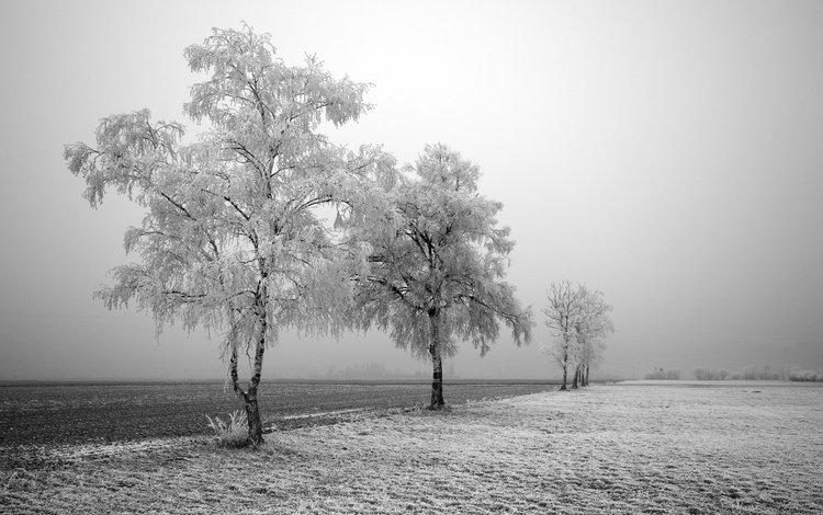 дорога, деревья, снег, зима, поле, березы, иней, road, trees, snow, winter, field, birch, frost