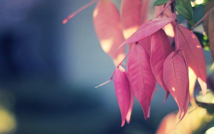 природа, листья, макро, осень, nature, leaves, macro, autumn