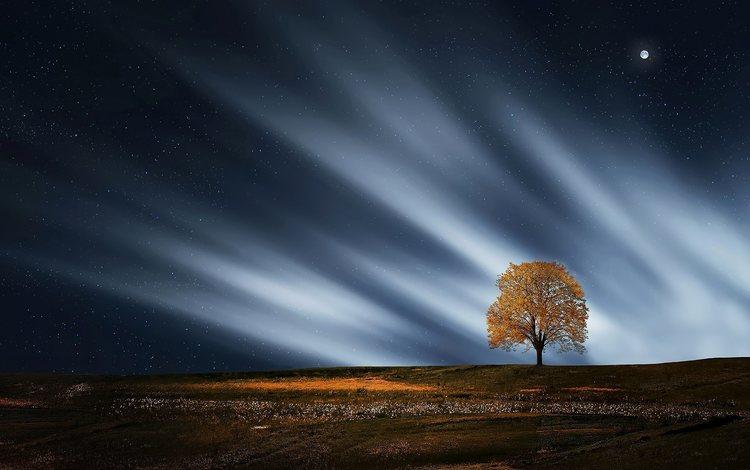 ночь, природа, дерево, пейзаж, звезды, луна, night, nature, tree, landscape, stars, the moon