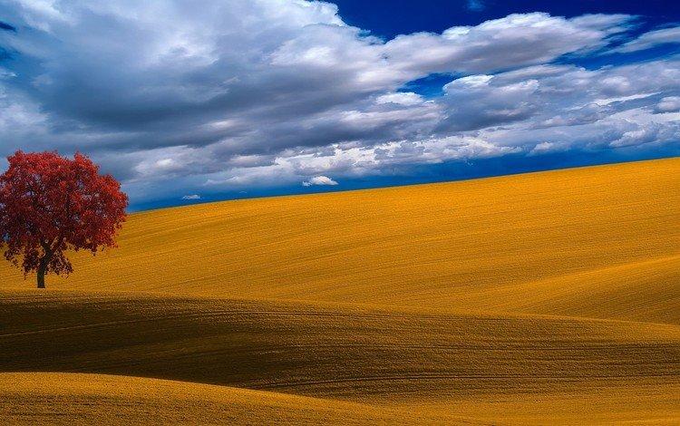 небо, облака, дерево, поле, the sky, clouds, tree, field