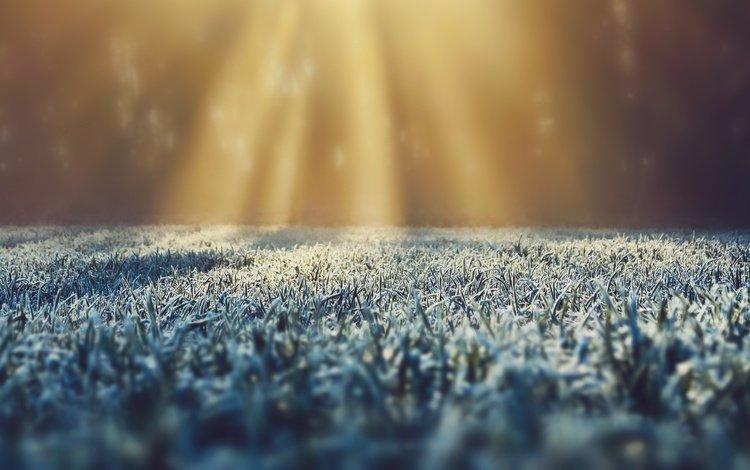 трава, иней, солнечный свет, grass, frost, sunlight
