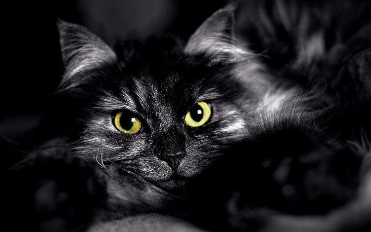 глаза, кот, мордочка, взгляд, чёрно-белое, пушистый, черный, eyes, cat, muzzle, look, black and white, fluffy, black