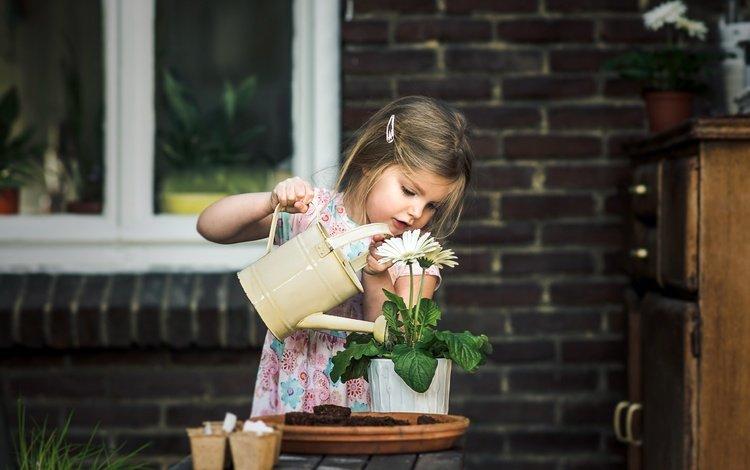 flowers, flower, children, girl, house, barrette, window, pot, lake