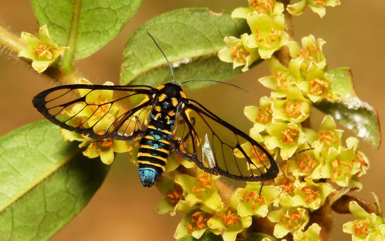 цветы, макро, бабочка, flowers, macro, butterfly