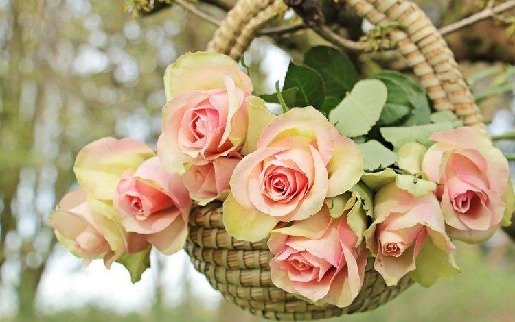 цветы, ветка, дерево, розы, корзина, flowers, branch, tree, roses, basket