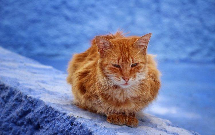 мордочка, усы, кошка, взгляд, пушистый, сидит, рыжий кот, сонный, muzzle, mustache, cat, look, fluffy, sitting, red cat, sleepy
