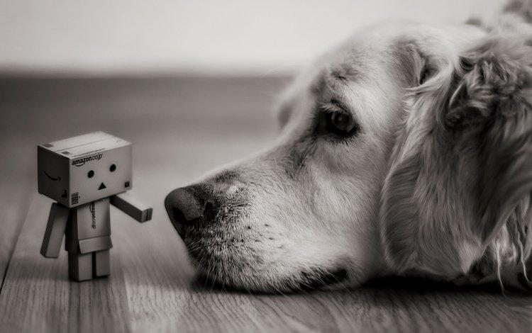 чёрно-белое, собака, печаль, друзья, данбо, картонный робот, робот бумага, black and white, dog, sadness, friends, danbo, cardboard robot, robot paper