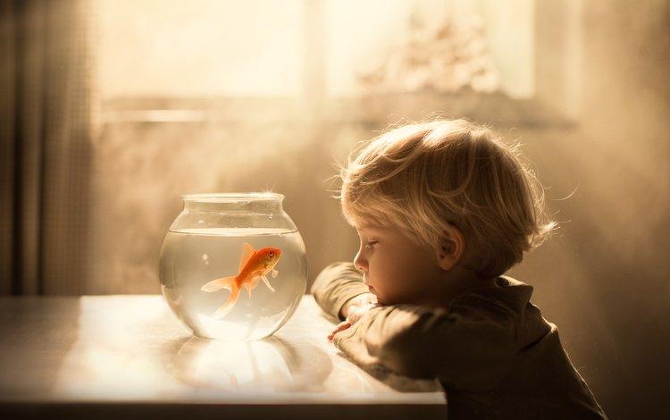 mood, table, child, boy, aquarium, fish, the sun's rays, sveta butko