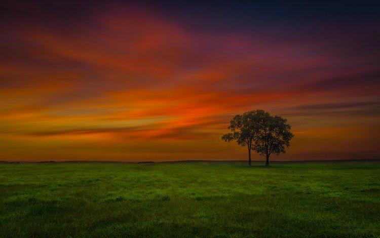 небо, вечер, дерево, поле, the sky, the evening, tree, field