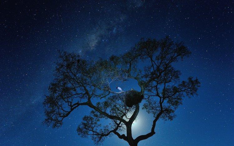 ночь, дерево, звезды, гнездо, night, tree, stars, socket
