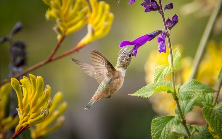 leaves, wings, bird, feathers, hummingbird, purple flower