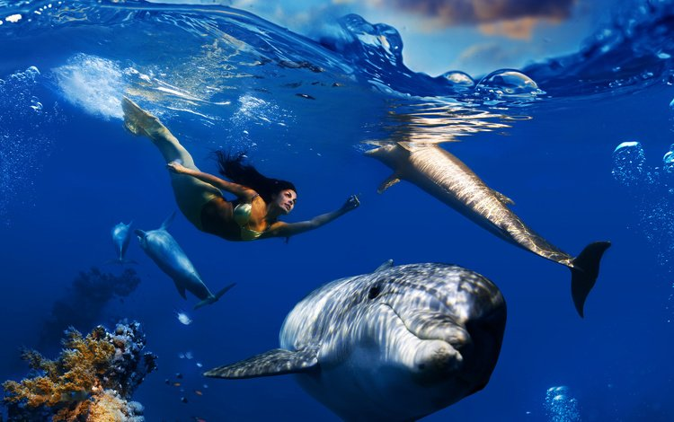 the sky, clouds, wave, sea, fish, under water, corals, bubbles, dolphins, underwater world, mermaid, floats
