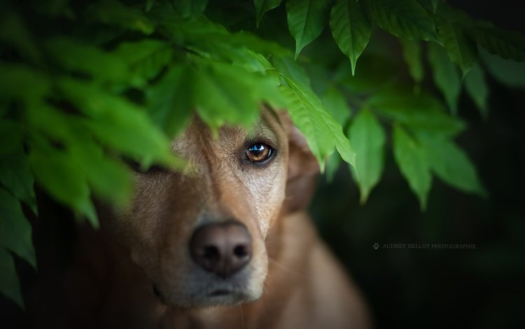 leaves, muzzle, look, dog