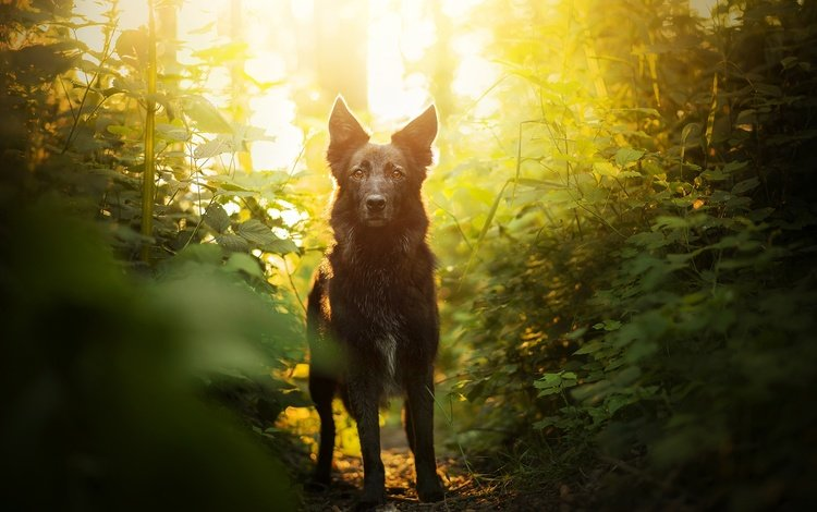 greens, muzzle, look, dog, bokeh, elina
