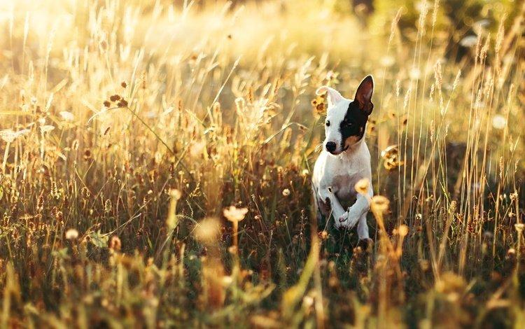 свет, природа, мордочка, взгляд, собака, щенок, друг, light, nature, muzzle, look, dog, puppy, each