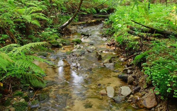 трава, кусты, деревья, папоротник, вода, камни, зелень, пейзаж, ручей, ветки, grass, the bushes, trees, fern, water, stones, greens, landscape, stream, branches