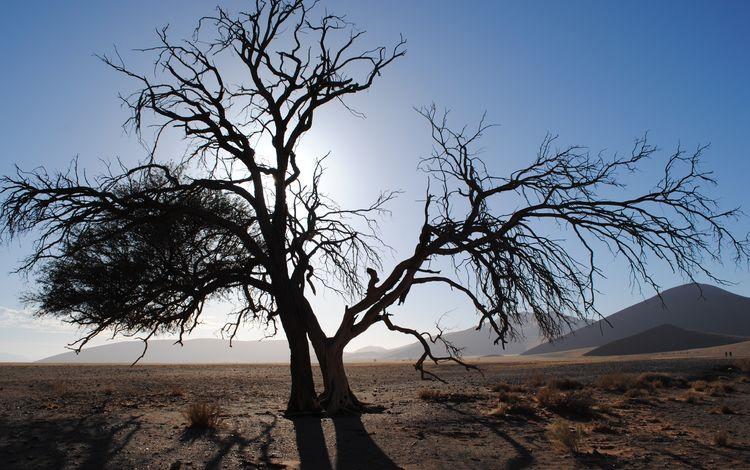 небо, намибия, холмы, природа, дерево, пейзаж, пустыня, африка, дюны, the sky, namibia, hills, nature, tree, landscape, desert, africa, dunes
