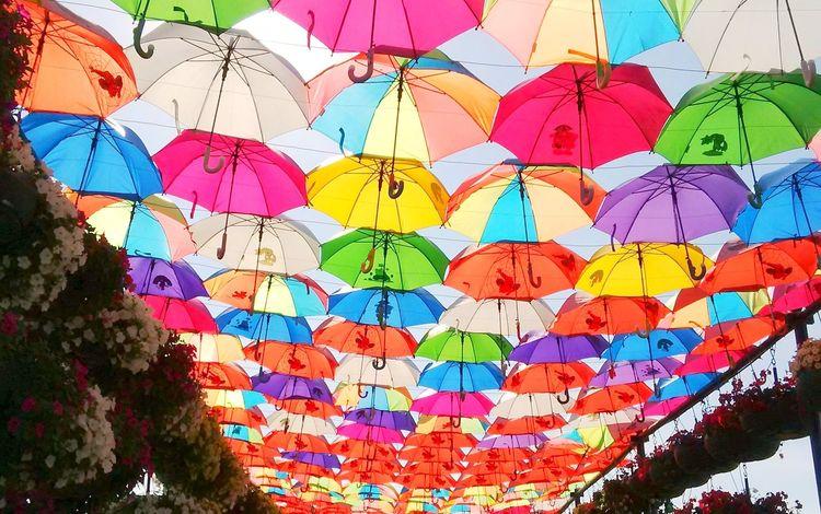 цветы, парк, разноцветные, город, зонтик, зонты, дубай, зонтики, flowers, park, colorful, the city, umbrella, umbrellas, dubai