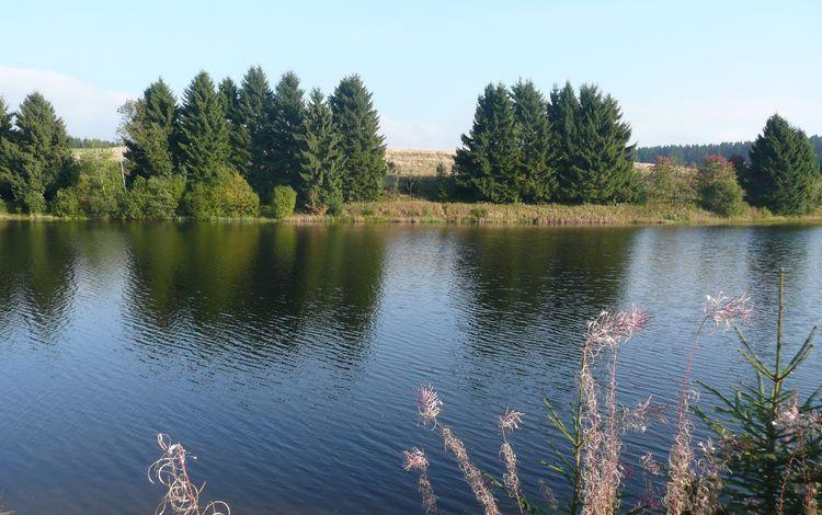 деревья, вода, озеро, река, природа, лес, пейзаж, trees, water, lake, river, nature, forest, landscape