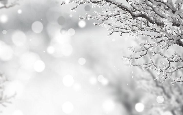 снег, зима, ветки, иней, чёрно-белое, snow, winter, branches, frost, black and white
