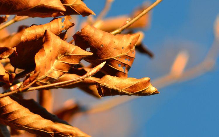 небо, ветка, дерево, листья, осень, the sky, branch, tree, leaves, autumn