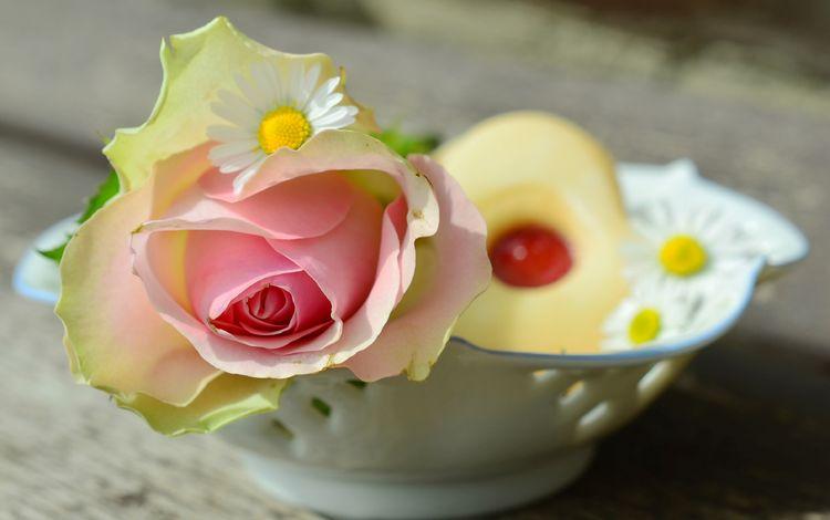 цветы, натюрморт, цветок, роза, ромашки, розовый, ваза, печенье, выпечка, flowers, still life, flower, rose, chamomile, pink, vase, cookies, cakes
