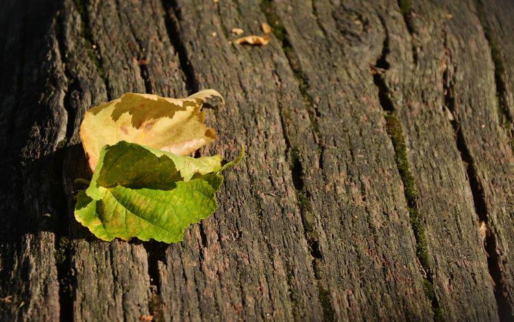 природа, листья, листва, осень, nature, leaves, foliage, autumn