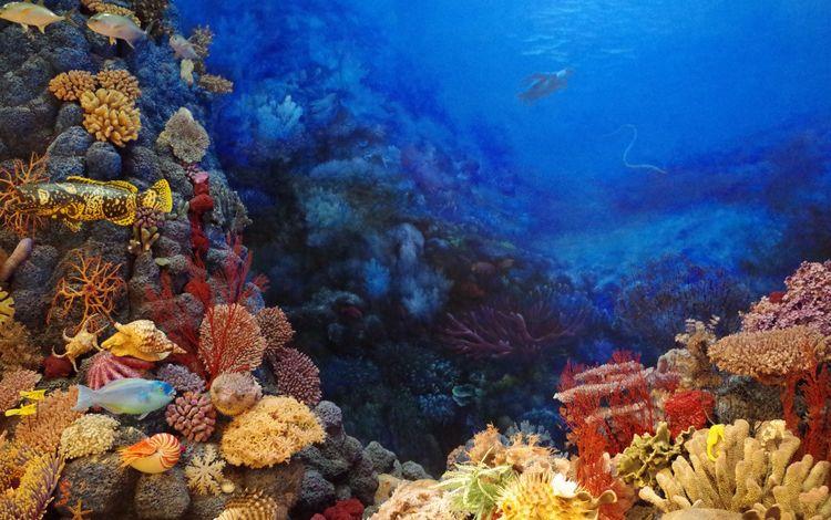 море, рыбки, рыбы, кораллы, подводный мир, тропические рыбы, sea, fish, corals, underwater world, tropical fish