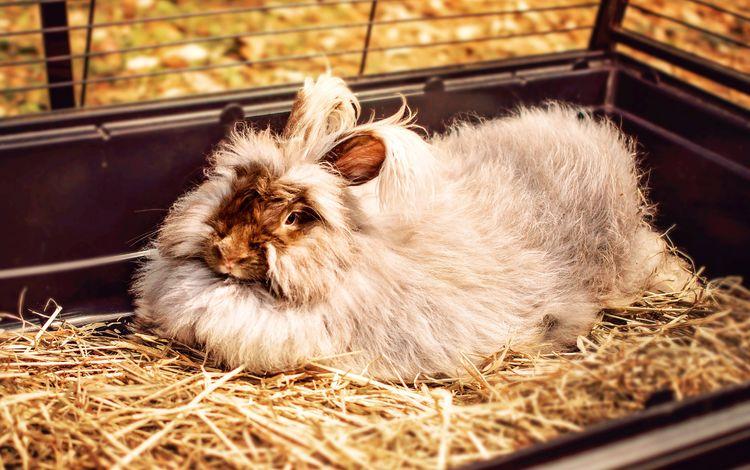 мордочка, сено, пушистый, ушки, кролик, мех, домашнее животное, muzzle, hay, fluffy, ears, rabbit, fur, pet