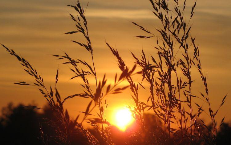 небо, колоски, трава, растение, восход, колоски природа, солнце, природа, пейзаж, поле, горизонт, the sky, spikelets, grass, plant, sunrise, ears nature, the sun, nature, landscape, field, horizon