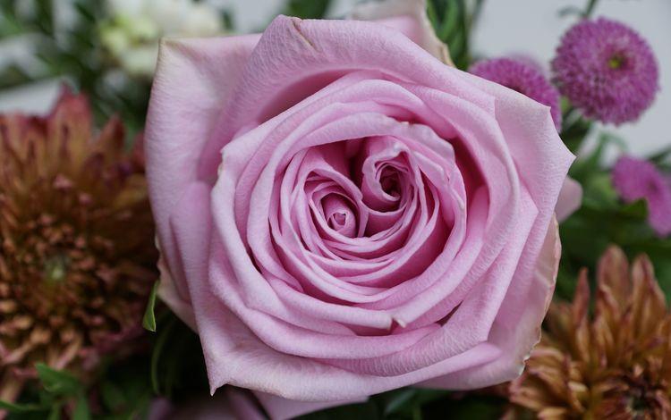 цветок, роза, лепестки, букет, подарок, flower, rose, petals, bouquet, gift