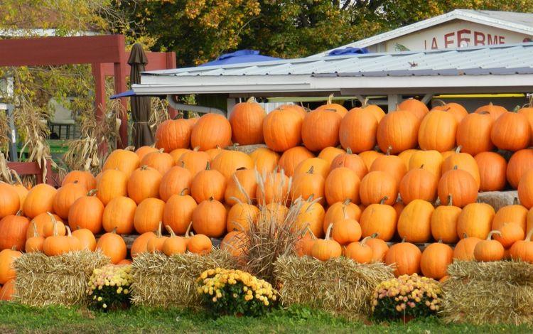 рынок, осень, урожай, овощи, тыквы, тыква, market, autumn, harvest, vegetables, pumpkin
