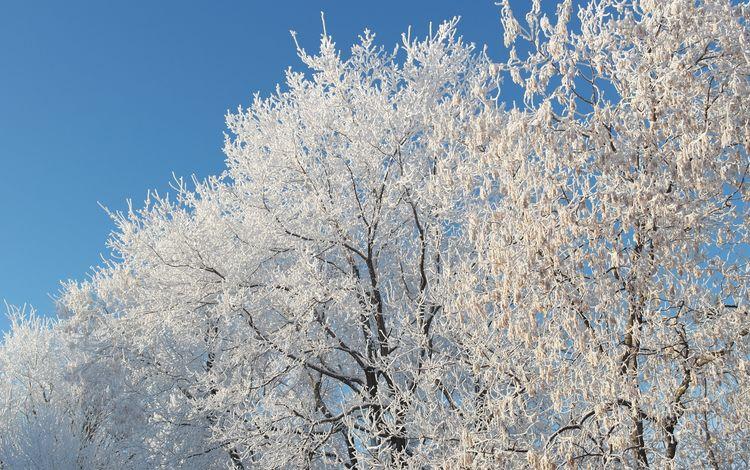 небо, снег, природа, дерево, зима, ветки, мороз, иней, the sky, snow, nature, tree, winter, branches, frost