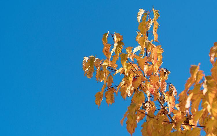 небо, природа, дерево, листья, ветки, листва, осень, the sky, nature, tree, leaves, branches, foliage, autumn