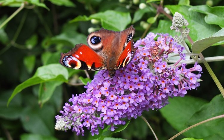 цветы, природа, листья, макро, бабочка, крылья, насекомые, размытость, flowers, nature, leaves, macro, butterfly, wings, insects, blur