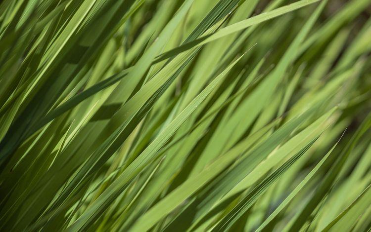 grass, nature, greens, plants, summer