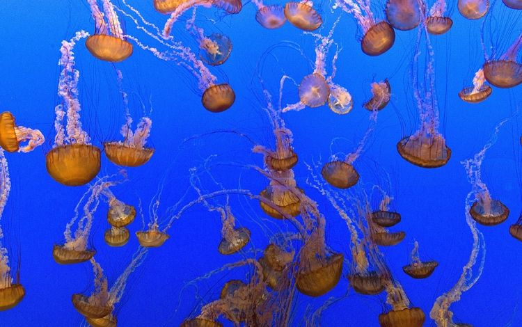 sea, jellyfish, underwater world