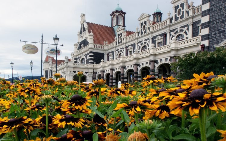 цветы, архитектура, новая зеландия, данидин, flowers, architecture, new zealand, dunedin