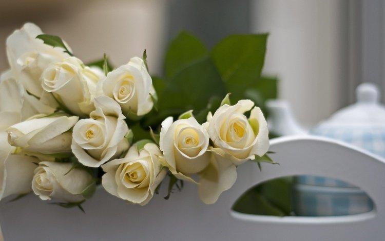 цветы, розы, букет, белые, flowers, roses, bouquet, white