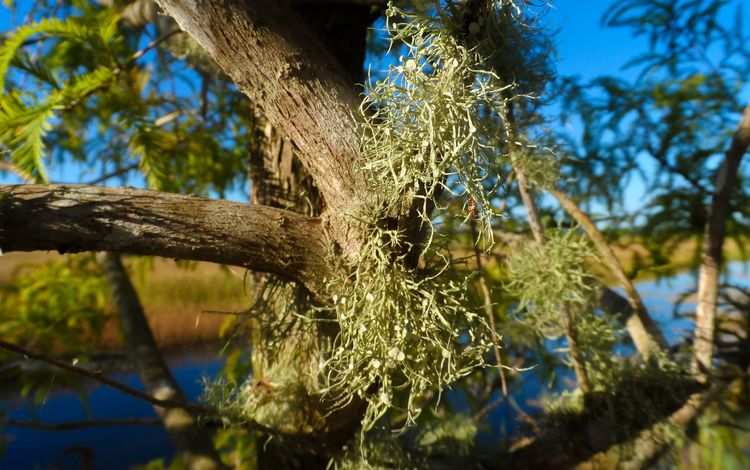 дерево, листья, мох, растение, tree, leaves, moss, plant