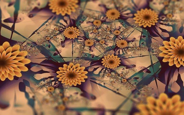 flowers, line, design, color, patterns, plant, daisy
