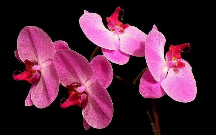 macro, background, petals
