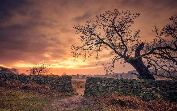 облака, дерево, забор, англия, брадгейт парк, clouds, tree, the fence, england, bradgate park