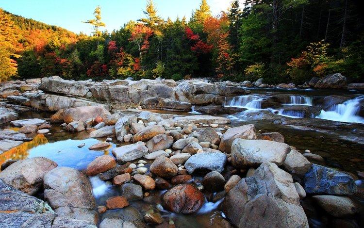 деревья, река, камни, лес, осень, поток, булыжники, trees, river, stones, forest, autumn, stream