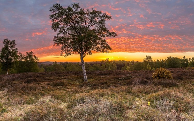 небо, трава, облака, деревья, поле, рассвет, англия, rockford, the sky, grass, clouds, trees, field, dawn, england