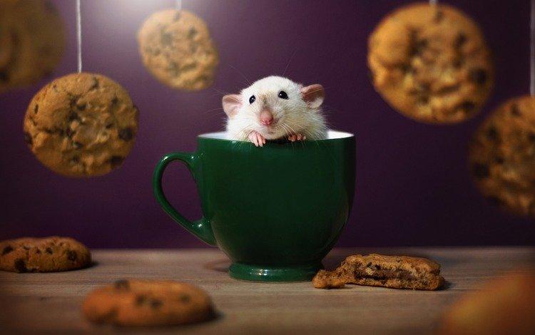 мышь, чашка, печенье, мышка, крыса, грызун, крыска, mouse, cup, cookies, rat, rodent