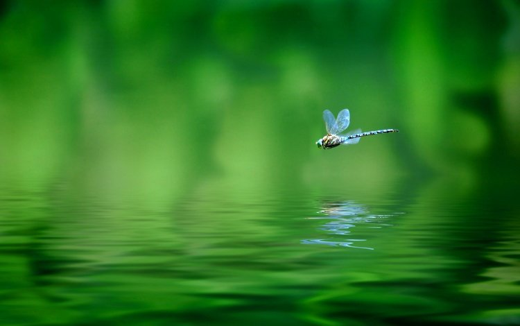 insect, reflection, flight, wings, blur, dragonfly, water surface, bokeh