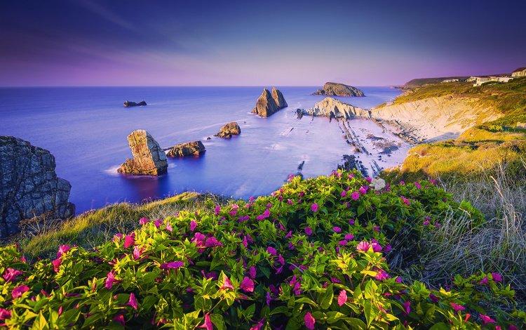 the sky, flowers, rocks, sea, coast, spain, cantabria, costa quebrada