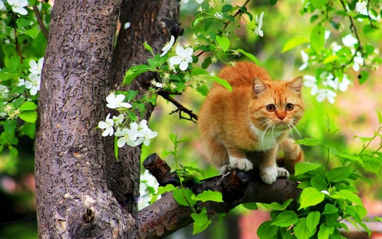 flowers, branch, tree, leaves, cat, muzzle, mustache, look