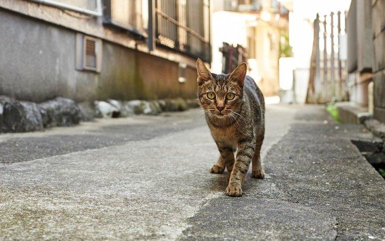 дорога, кот, город, кошка, взгляд, дома, улица, двор, road, cat, the city, look, home, street, yard
